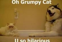 Cats:)