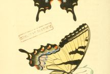 Zoological drawing