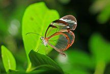 Nature = Wonderful