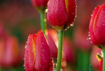 Květiny / Flowers