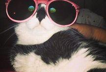 gatti gattosi