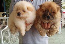 Cute animals ️ / Cute animals ❤️