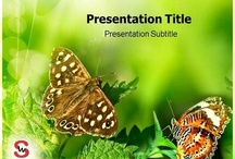 Insects PowerPoint Presentation