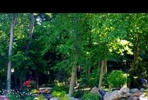 My yard, pond, garden etc...