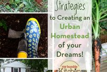 Urban Gardening & Homesteading