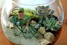 Garden Box