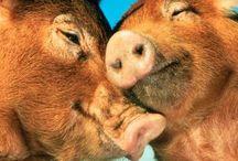 PIGS! :))) <3 / by Cruz Zastrow