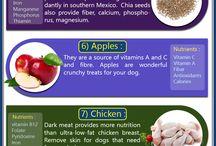 Dog Infographics / Find best infographics about dog breeds, dog foods, dog training, low maintenance dogs etc...