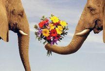 Elefante Mio