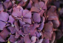 Flowers / Petal perfection
