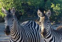 Zoo Medicine