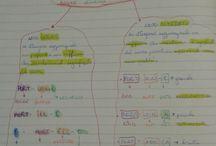 classe v quadernone riflessione linguistica