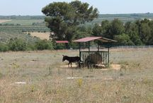 Agriturismo Selva Reale