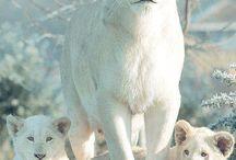 animales hermosos