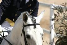 Centro Ecuestre - Equestriam Center Hípica San José Toledo / The better place horse ridding El mejor lugar para practicar la equitación