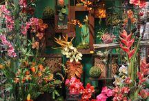 Templeberg Garden Parties/Ideas