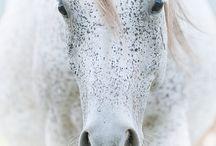 HORSE / by Kaylee Heuer