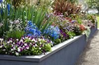 Plant Combinations / Plants that work well together, colour combinations, garden layering and different textures