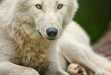 Fur :3