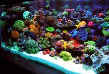 aquários marinhos