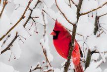 Photos I Love: Birds / by Gail Hyatt