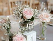 シンプルピンクのバラ