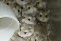 hamsterhuis