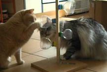 Speelgoed katten