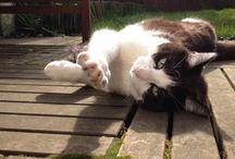 Mes visites de chats / Dogsitting lille garde votre chat à domicile: ça lui permet de rester dans son environnement et de garder ses habitudes.