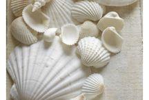 sea....seashells...swim...endless blue...