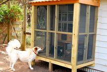 Cat Enclosure (Cattery, Catio)