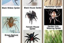 Animais - Aranhas (ODEIO QUALQUER TIPO)
