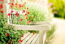 Bloemen, planten & tuin