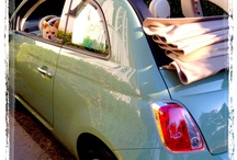 Love Fiats / Coco and I love to go out with her top down on the backroads...so much fun! / by Deborah Morton