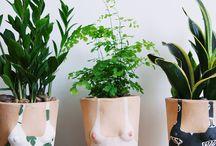 Plantas - Flores
