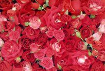 Rozengeur en maneschijn / Rode rozen, gele rozen, roze rozen, oranje rozen, ... een regenboog aan rozen. Wij houden van rozen! Ontdek de leukste creaties met rozen en de mooiste boeketten op onze rozengeur en maneschijn bord.
