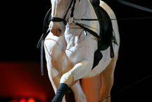 konie    źrebaki    kucyki