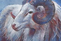 Animals / Drawings from farm animals made by Loes Botman in pastels.