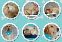 Peluquería canina - EVI / Nuestro objetivo principal es lograr tu satisfacción absoluta, y que tu #peludito quede con el look que estabas buscando. Ofrecemos también baños medicados según las necesidades de tu #mascota y las recomendaciones de los doctores.