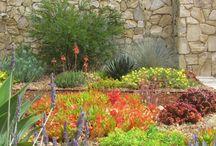Plants I Dig