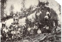 Old School Logging Photo's / Here you will find how logging wood and trees was done in the old days!