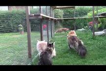 psi, kočky a ostatní
