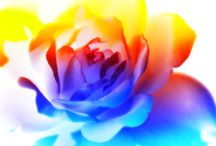 Inverted Flowers / Flowers are pretty in the colors our eyes see but inverted they take on an ethereal feel.