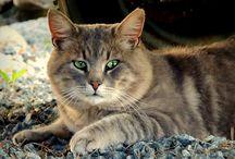 cats :>
