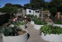 landscape - community garden