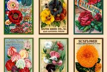 Illustrations and posters
