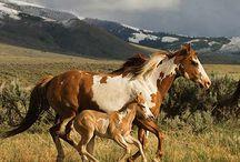 Horse/lovak