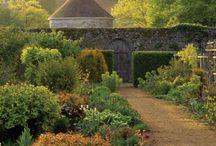 Garden / by Judith Cook