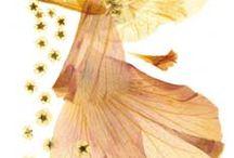 Basteln mit Blüten/Pflanzen