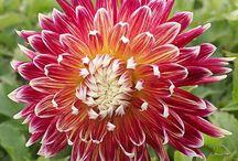 Pretty Flowers / by Katie King